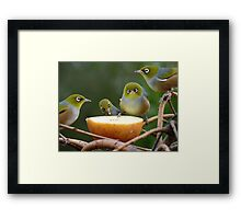 Don't Put YOUR Foot In It!!! - Silver-Eyes - NZ Framed Print