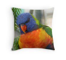 Iv'e Been Framed!!! - Rainbow Lorikeet - NZ Throw Pillow