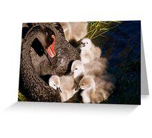 I'm Listening Little Lilly - Black Swans - Cygnets - NZ Greeting Card