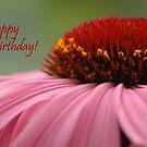 Echinacea Birthday Card by Lorraine Deroon