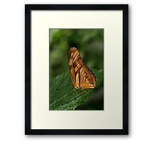 Wings Framed Print