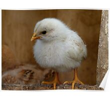 I'm CHEEP, cheep.. To Keep!!! - Baby Chick - NZ Poster