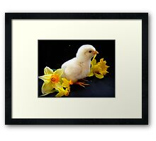 I'm A Little Daffodil Joy - Sussex Chick - NZ Framed Print