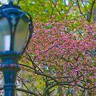 Lantern by alissawilkinson