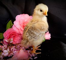 FLOWERS??...Is There Something You Want To Tell Me - Chick - NZ by AndreaEL
