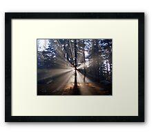 Sunrise in the woods Framed Print