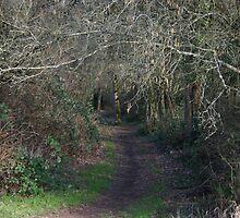 Road Not Taken by Megan Buff