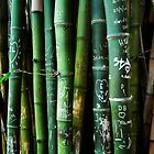 bamboo graffiti by Kate Wilhelm