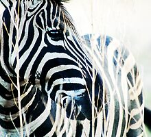 zebra by Kate Wilhelm