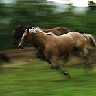 horse run by George  Close