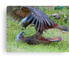 Do You Give Up Yet!!! - Kaka Parrot - Stewart Island Canvas Print