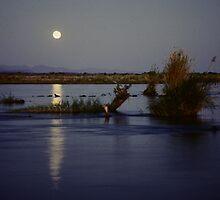 Moonlight over the Zambezi by bertspix