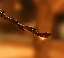 Angel Teardrop by Ken Fortie