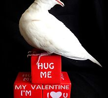 Hug Me My Valentine I'm Yours I♥U - White Dove - NZ by AndreaEL