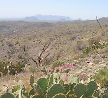 The Living Desert by betsyp
