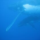 Whale and Calf by bessie420