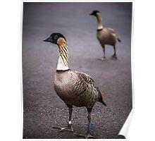 Hawaiian Nene Geese Poster