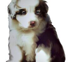 Australian shepherd puppy by IowaArtist