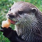 Hungry Otter by Kayte