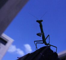 Monster Mantis from Outer Space! by elledeegee