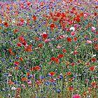 Poppies & Wild French Flowers by photobymdavey