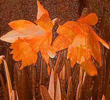 Daffodils by MidnightAkita