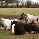 And the little one said roll over! by kmargetts