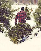 Christmas Tree Farm by Debbra Obertanec