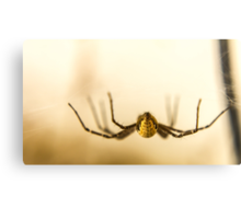 The best side of a donk... I mean a spider... Canvas Print