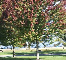 Add Some Color To A Well Groomed Park by Shawnna Taylor