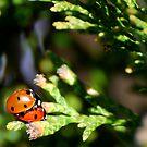 Love Bugs by KarDanCreations
