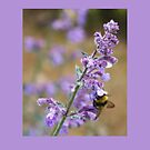 Honey from a Lavendar by MichelleRees