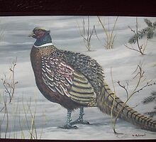 Ringed neck pheasant by bullerwell