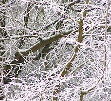 Frost Bite by jdmphotography