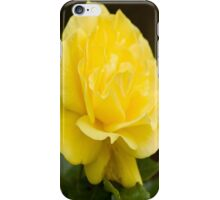 Golden Yellow Rose Isolated on Black Background iPhone Case/Skin