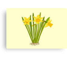 Beautiful Daffodils Canvas Print