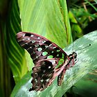 Butterfly on leaf by lisa1970