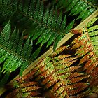Tree Fern leaf Tasmania by Imi Koetz