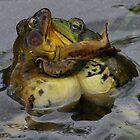 Frogs in Love by zenmatt