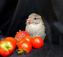 Yum... Rescued Sparrow - NZ by AndreaEL