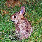 little baby bunny  by LoreLeft27