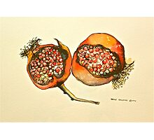 Pomegranate. Pen and wash 2012Ⓒ  Photographic Print