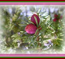 Rocky Mountain Beauty by kaystrauss
