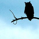 owl silhouette by Troy Spencer