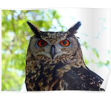I'm Silent... But Deadly!- Spotted-Eagle Owl - SA Poster
