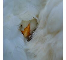 Snuggle Time - NZ Photographic Print