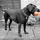 Stella's orange ball by lisa1970
