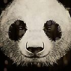 panda eyes by vinpez