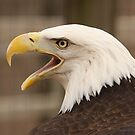 Screaming Eagle by Gregg Williams