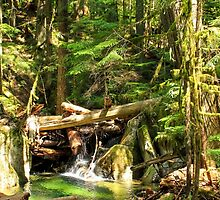 Pacific Northwest Forest by journeysincolor